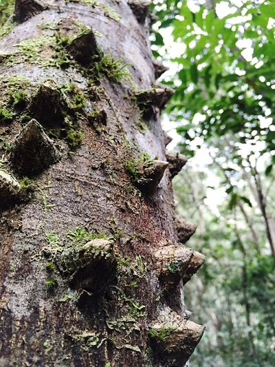 Almost reptilian... Tree Trunk Close-up Outdoors No People Beauty In Nature Differential Focus