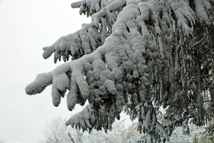 Low angle view of frozen statue against sky