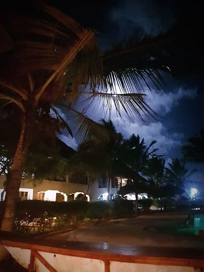 Illuminated Tree Architecture No People Nature Sky Outdoors Motion