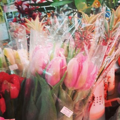最喜欢的郁金香