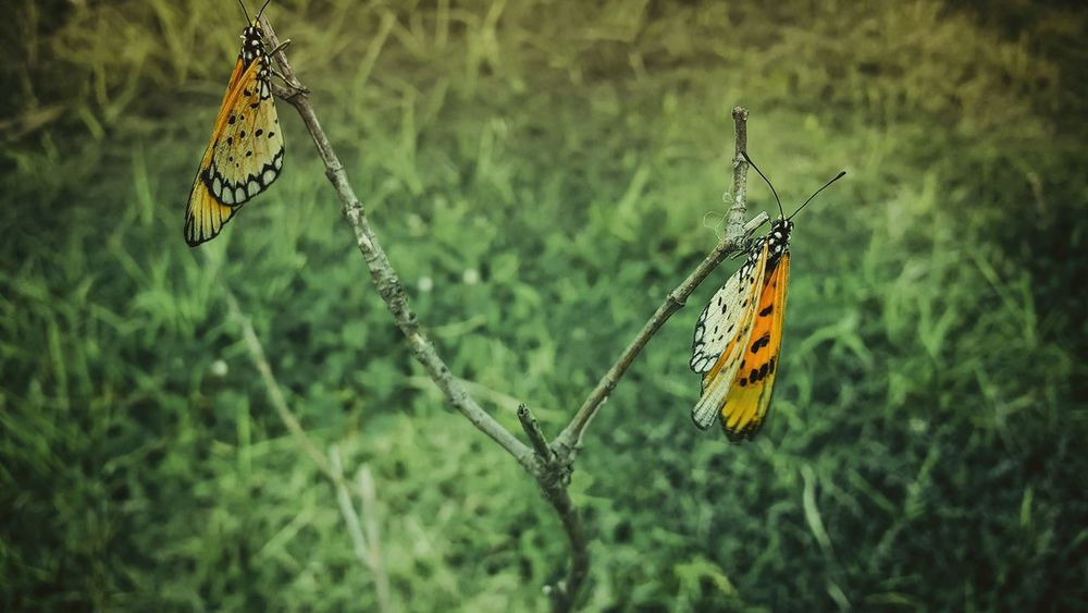 Butterflies! Butterfly Butterflies Butterfly Collection Nature Similarity Similar Pair Love Beautiful Beautiful Nature Insects