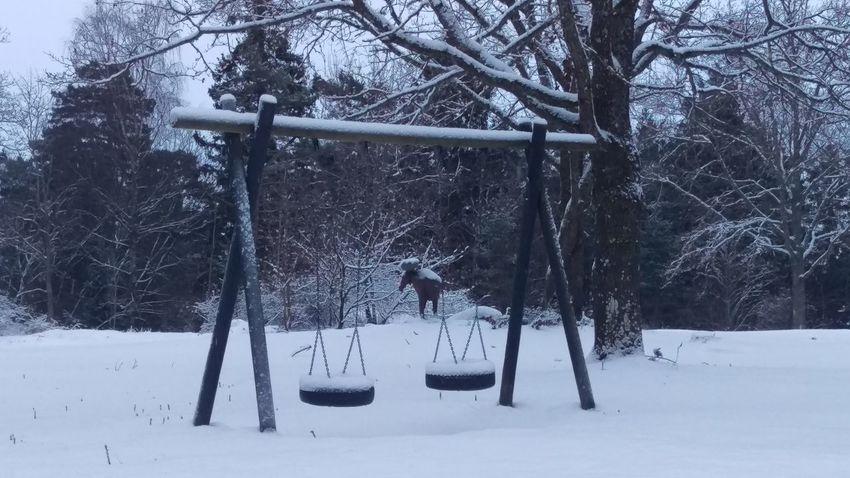 It's Cold Outside Empty Park Kolmården Cold Tourism View Snow Sweden Wintertime Scandinavia Sverige Snow Covered Garden Winter