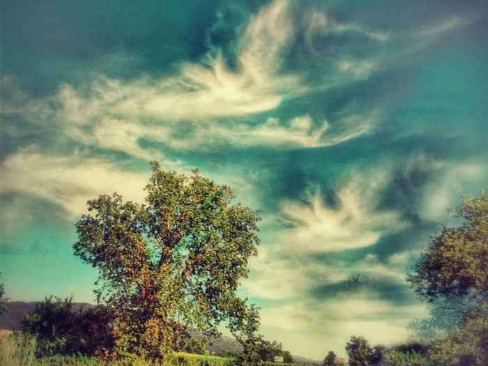 Tree Dramatic Sky Nature Cloud - Sky Beauty In Nature Outdoors No People Landscape Tranquility Forest Growth Blue Storm Cloud The Great Outdoors - 2017 EyeEm Awards Northern California Beauty In Nature Nature Enjoying Life Random Acts Of Photography Scenics Day