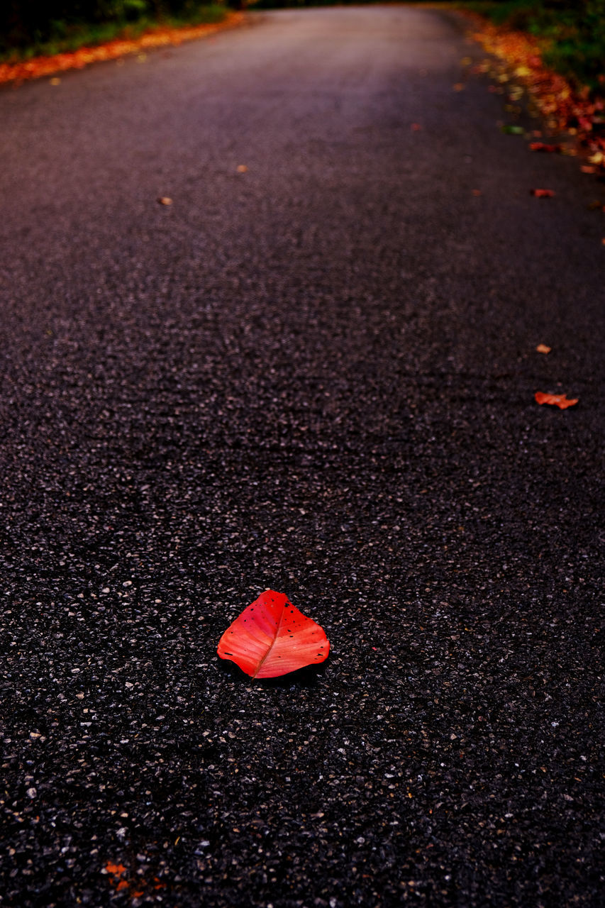 CLOSE-UP OF AUTUMN LEAVES ON ROAD