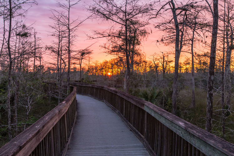 Beauty In Nature Big Cypress National Preserve Connection Everglades  Footbridge Kirby Storter Roadside Park Nature Outdoors Scenics Sky Sunset The Way Forward Tree
