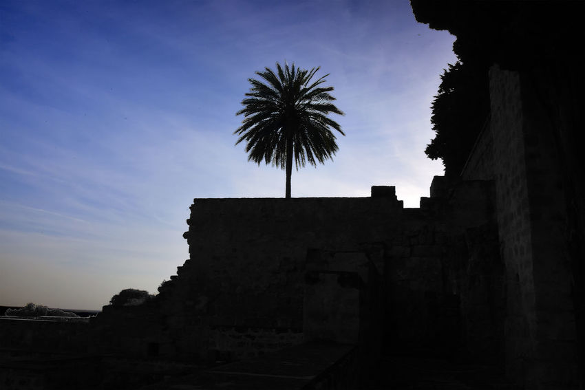 Andalucía Palm Palm Tree Silhouette Black Photography Built Structure Cloud - Sky Landscape Low Angle View Nature No People Outdoors Plant Silhouette Silhouette Photography Sky Tree Tropical Climate