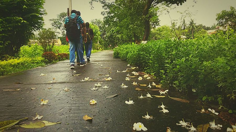 Walking away Flowers Rain Road