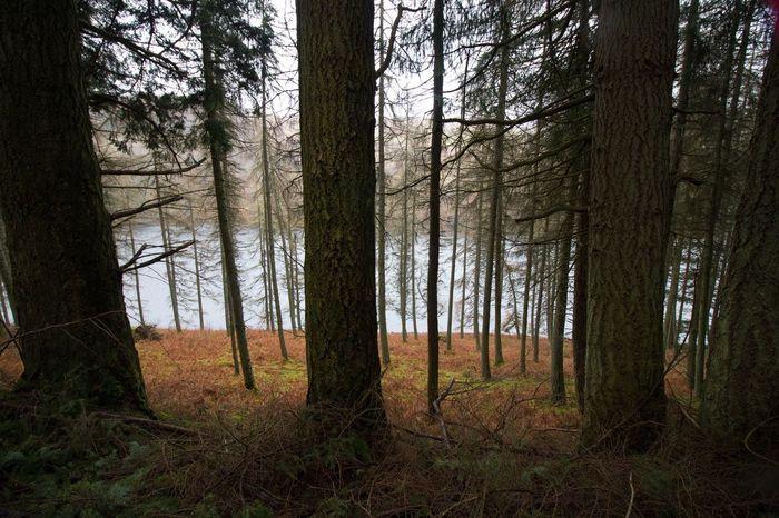 Wales Uk Adventure Venture Onward Drive Travel Elan Valley, Wales Water Rain Trees Mountains Hills Showcase April