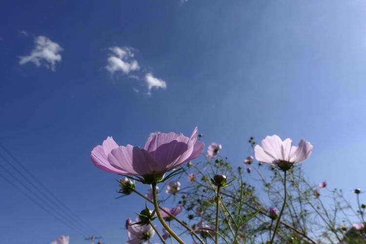 Flowers, Nature And Beauty Sky Nature Sunny Outdoors No People