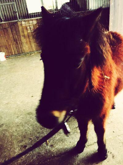 ️Sweet Little Pony