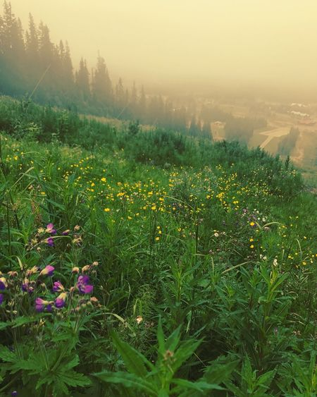 Nature Growth Fog Plant Beauty In Nature Tranquility Flower Landscape Field No People Outdoors Tranquil Scene Grass Scenics Day Freshness Sky lindvallen Skistar sälen