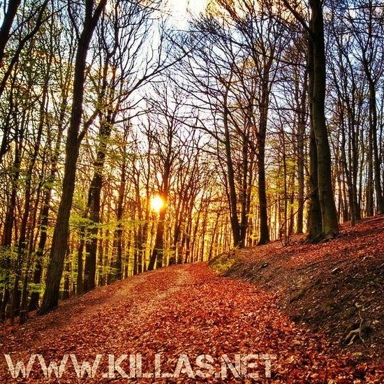 Stadtwald  Iserlohn Sonnenuntergang Wald Waldweg