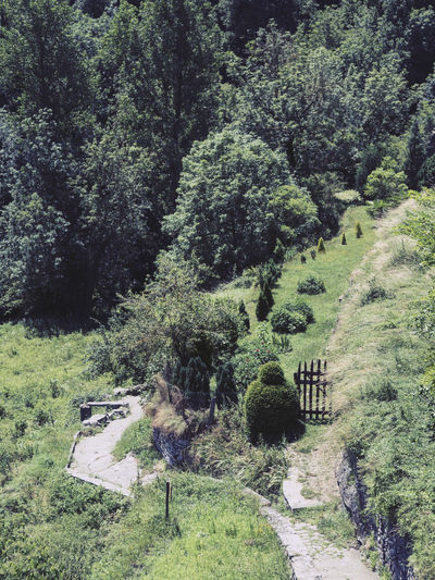 High angle view of footpath amidst trees
