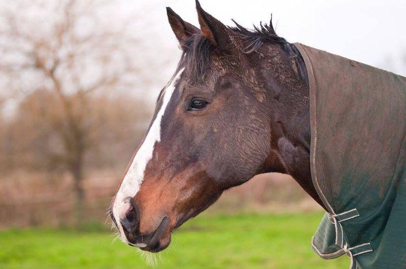 Horse Pferd