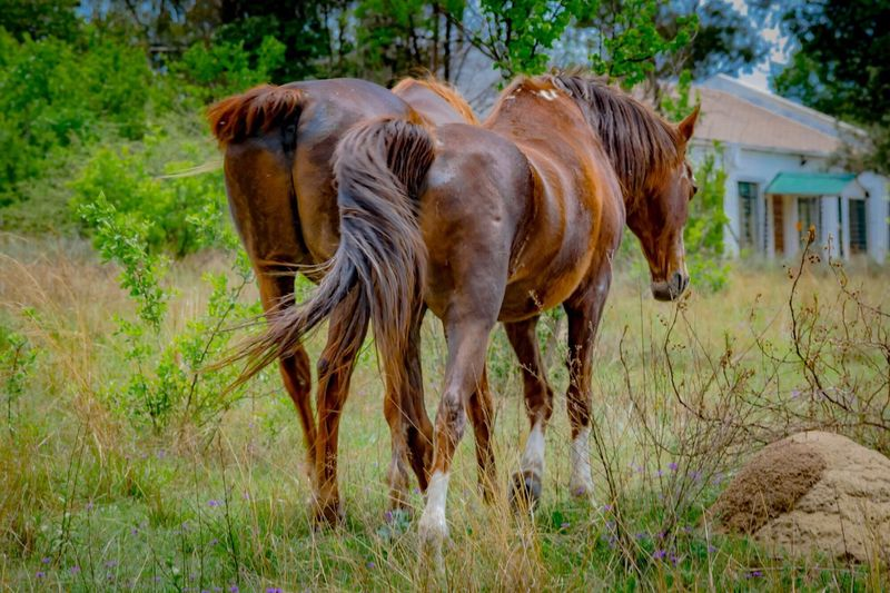 Horses heading Home Sweet Home Domestic Animals Horse Animal Themes Mammal Livestock No People Day Grass Outdoors Nature Standing