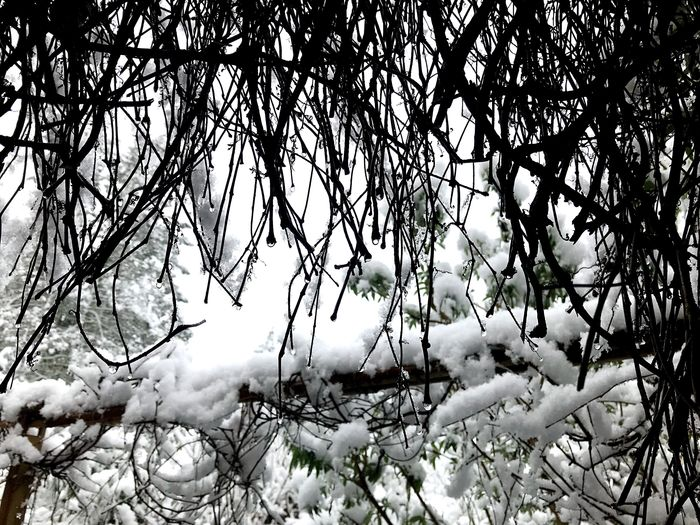 Nature Branch Tree Winter Growth Beauty In Nature Shades Of Winter Outdoors No People Cold Temperature Twig Tranquility Day Snow Low Angle View Plant