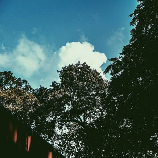 🌲🌳 © Sky Trees Tree Peaceful Mother Nature Blue Green Surabaya Jalan Jakarta INDONESIA Calm Calming Clouds P5 Instagood Instavibe That  Feel Feeling Watchmeinstagood Instagram Showcase March vscoind vscophile photography filmmaking blog