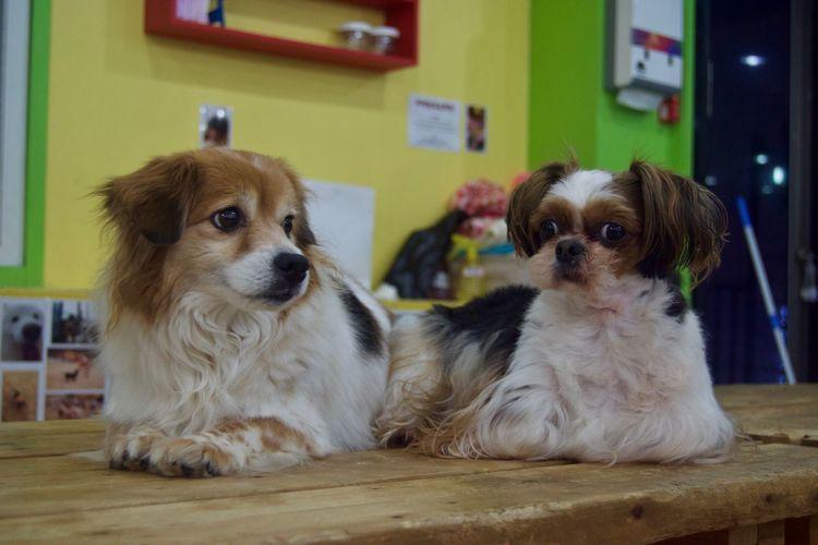 Animal Close Up Cute Cute Pets Dog Domestic Animals Friendly Pet