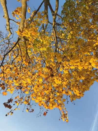 Looking up Tree Nature Nature_collection Autumn Fall Landscape Landscape_Collection Landscape_photography Leaves Beauty In Nature