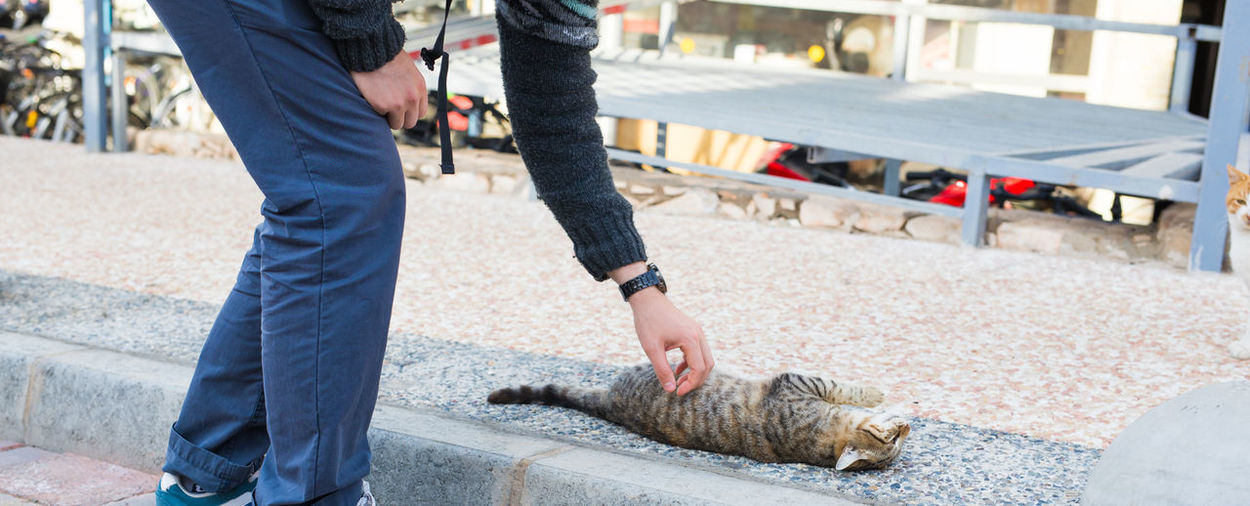 Man and cat on street in city