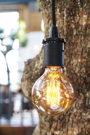 Close-up of illuminated light bulb by tree trunk