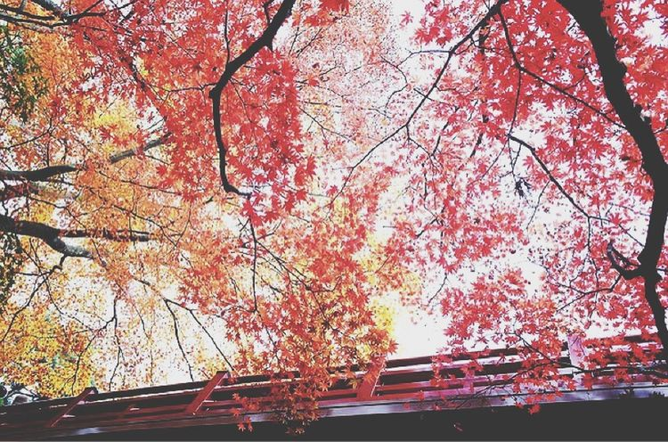 Japan Japanese  Leaves