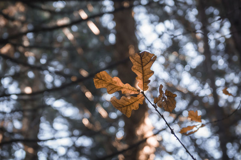 Low angle view of dry leaves on tree in forest