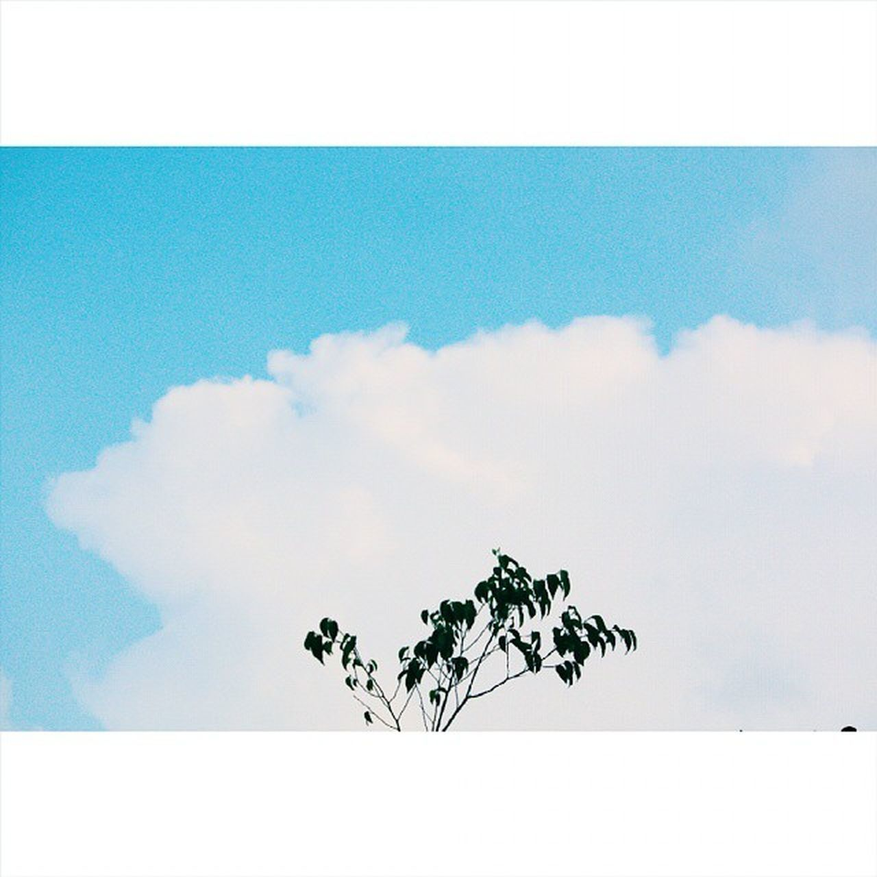 cloud - sky, sky, no people, day, scenics, outdoors, nature, beauty in nature, animal themes