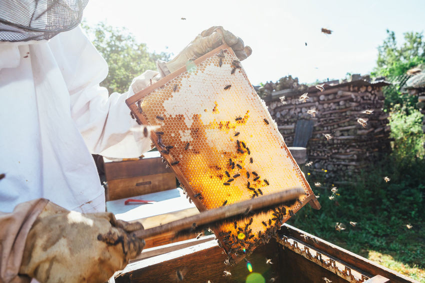 honey production and beeskeeping APIculture Agriculture Bees Honeycomb Apiary Beehive Beekeeper Beekeeping Beeswax Collection Colony Extraction Food Healthy Hive Honey Honey Bee Honey Production Insect Nest Organic Outdoors Pollen Smoker Structure The Week On EyeEm