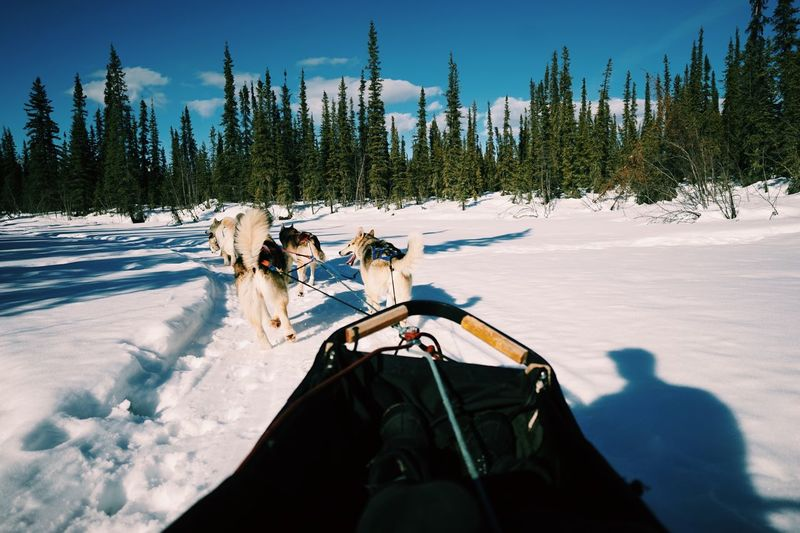 Person dog sledding on snow covered landscape against sky