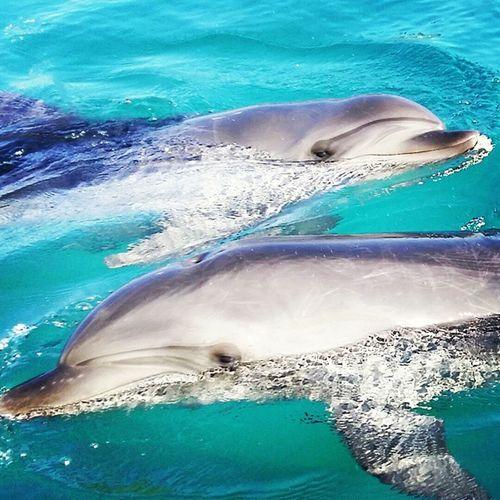 Instagram Insta Instagood Dolfin Dauphin