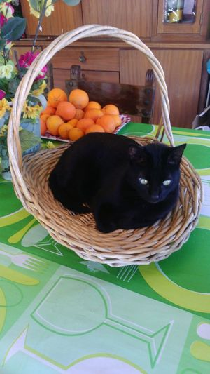 food cat photography Basket Of Fruit With Cat