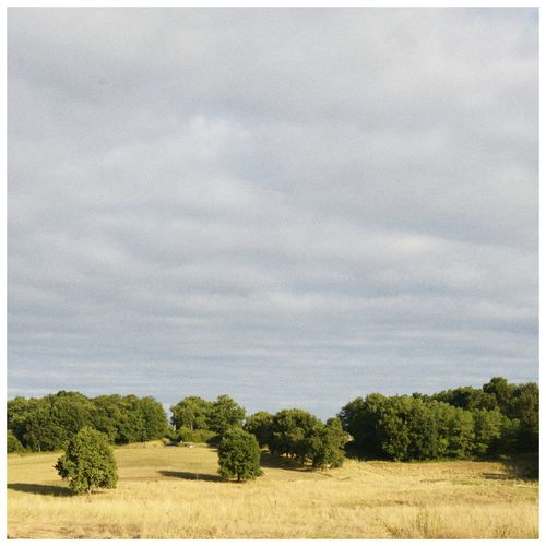 Eyem Nature Lovers  Danmark Treescape Minimal Square Format Lovers