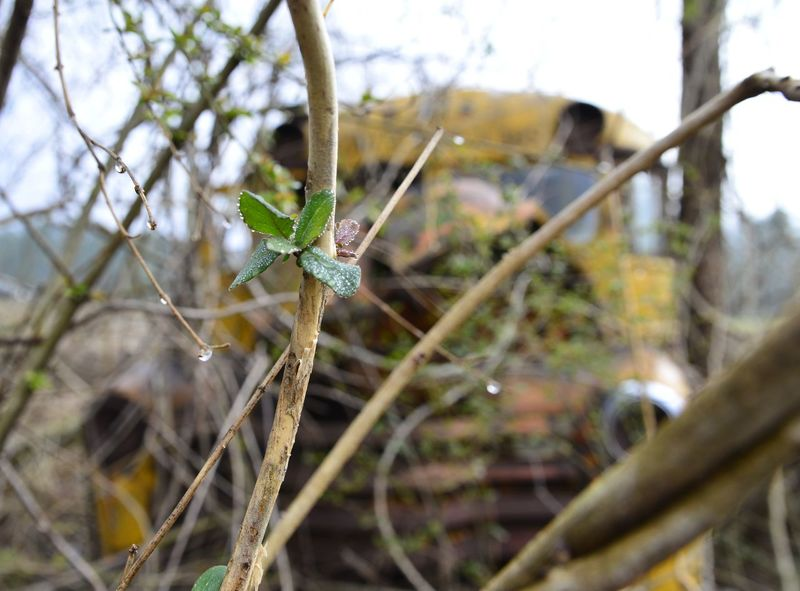 Close-up Depth Of Field Focus On Foreground Growth Junk Cars Leaves New Life Plant School Bus Selective Focus Stem Taking Photos