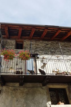 Two Cats Old-fashioned Old Building Exterior Mountain Village Life Windows Mountain House Two Cats On The Balcony House Built Structure Architecture Day Outdoors Building Exterior Roof Low Angle View No People Sky