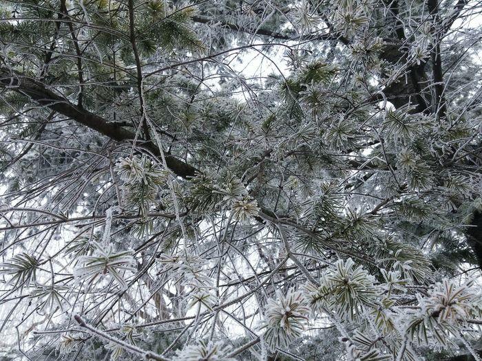 Tree Low Angle