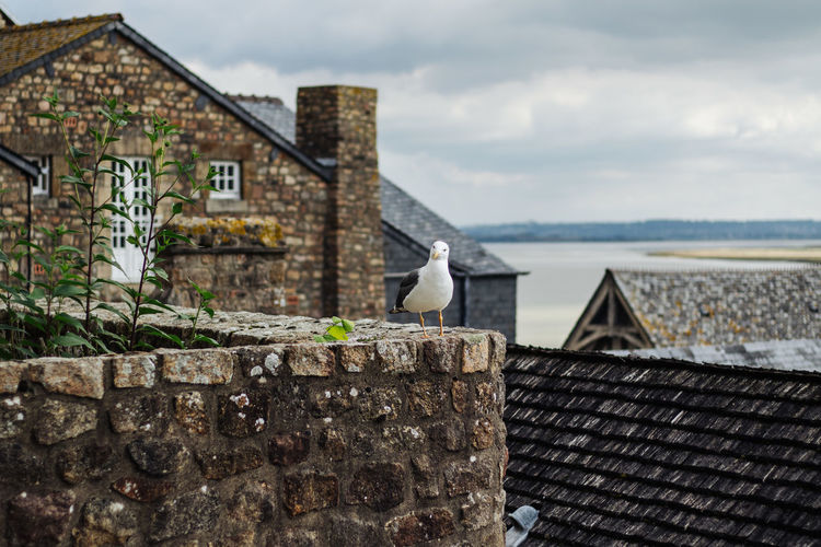 Seagull perching on roof against building