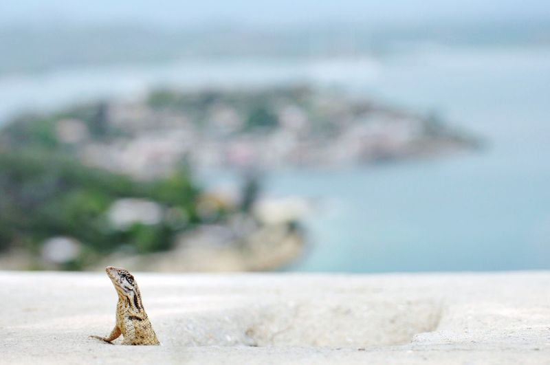 Close-Up Of Lizard On Retaining Wall By Sea Against Sky