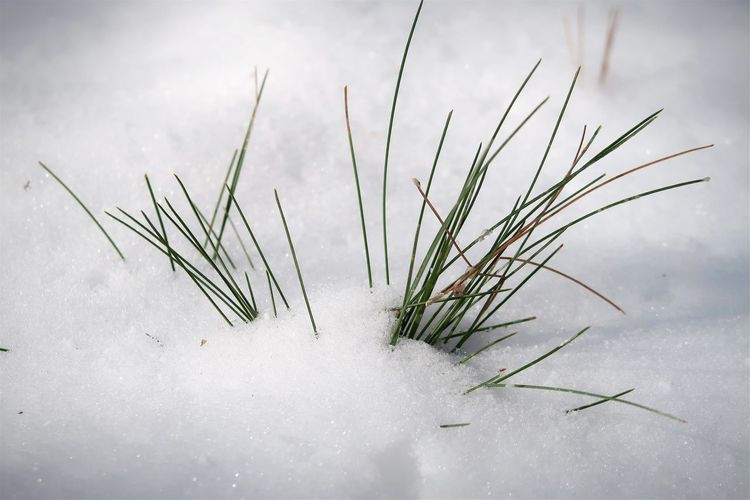 High angle view of plant on snow covered field