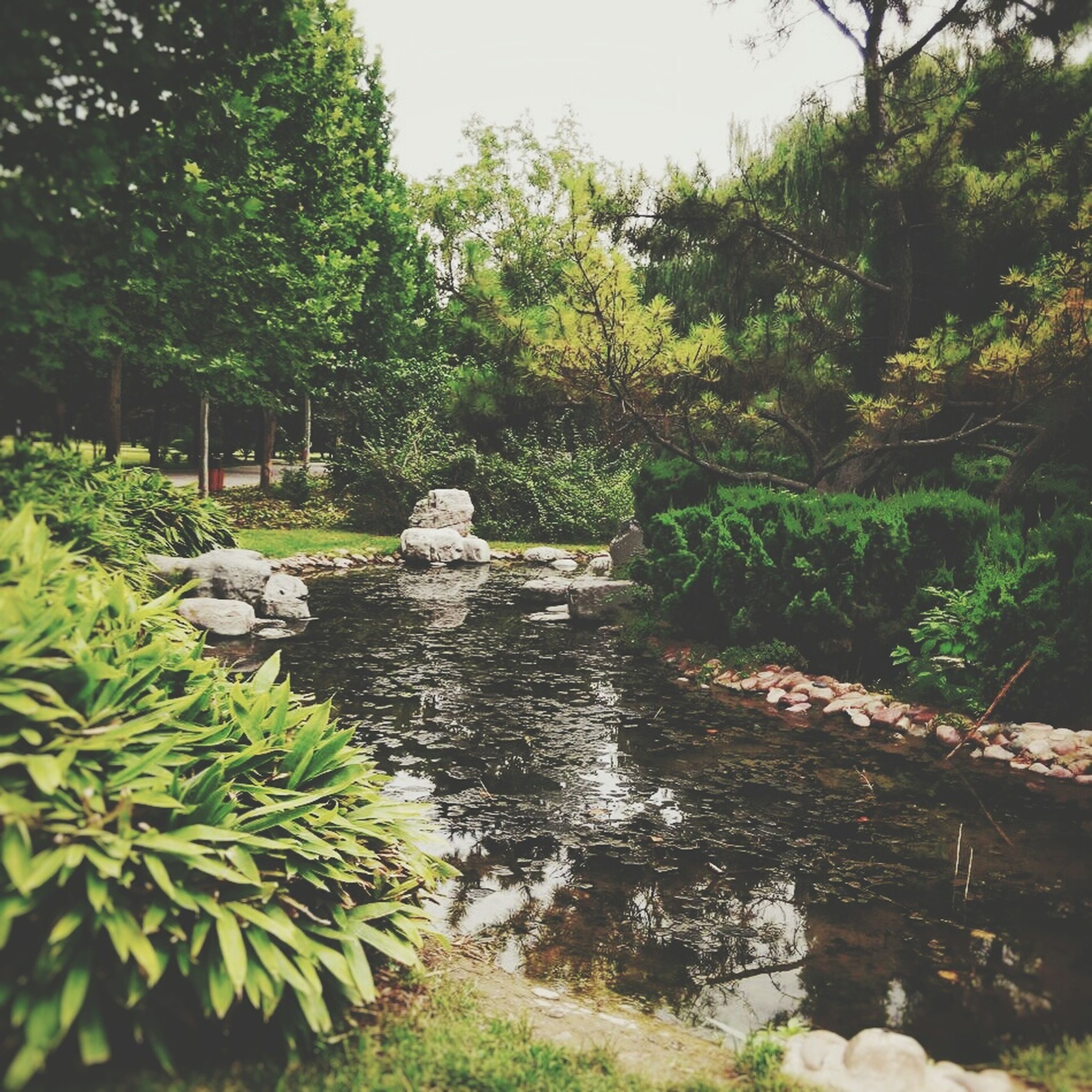 water, tree, growth, green color, tranquility, nature, plant, rock - object, beauty in nature, tranquil scene, scenics, river, day, pond, park - man made space, outdoors, green, no people, stream, lush foliage