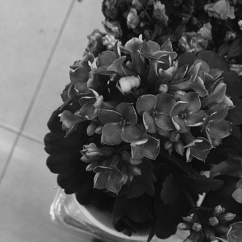 Flower in summer VSCO Vscobulgaria Vsconature Vscocam Vscophoto Blackandwhite Photography Minimalism Mininalist Blackandwhite Photography