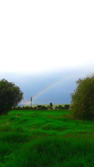 ♡... Tree Beauty In Nature No People Tranquility Sky Perfectnature Rainbow🌈 Rainbow Sky Rainy Days