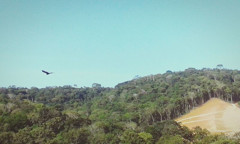 Nature Brazilian Sky First Eyeem Photo