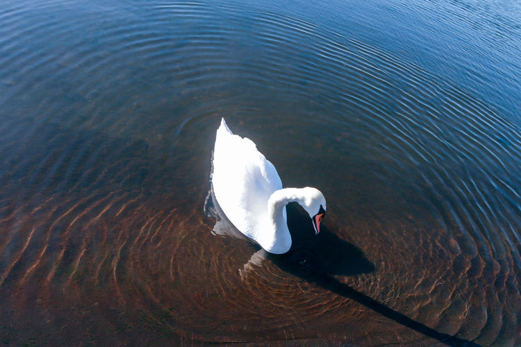 High angle view of swan swimming in sea