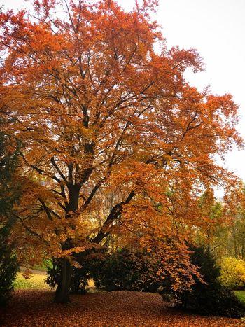 Petřín Garden Traveling Autumn Colors Tc-ce2014