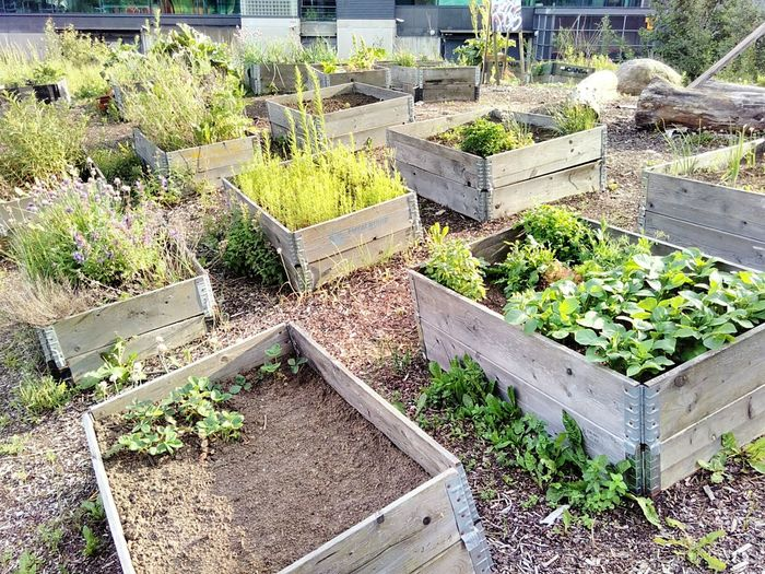 Urban Gardening Urban Garden Green Brown Soil Crate Wood Agriculture Community Garden Farming Small Scale City Life Local Food Homegrown Plant Vegetation