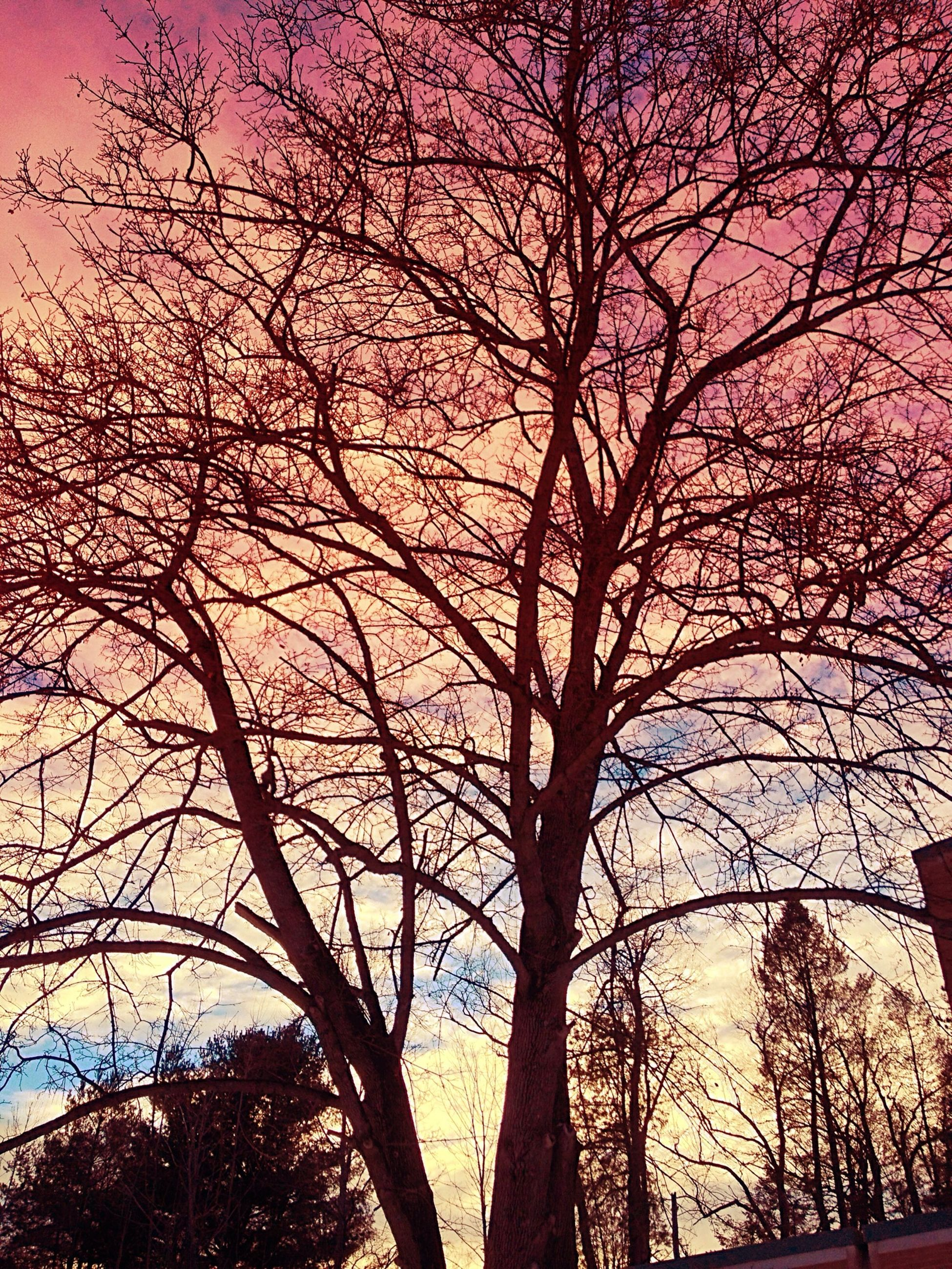 tree, branch, bare tree, low angle view, silhouette, sunset, sky, beauty in nature, nature, tranquility, growth, scenics, tree trunk, orange color, tranquil scene, outdoors, no people, dusk, idyllic, built structure