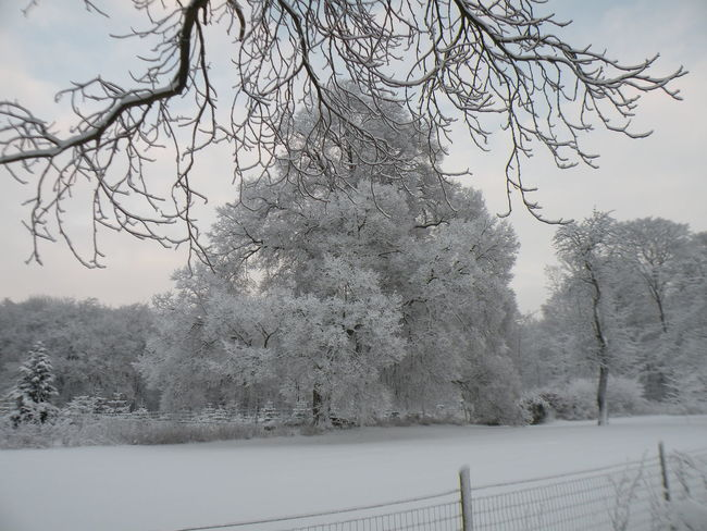 Tree Winter Snow Cold Temperature Bare Tree No People Snowing Nature Day Outdoors Sky Branch Beauty In Nature Tranquility Danmark Danish - in the Countryside of the island of Zealand in Denmark