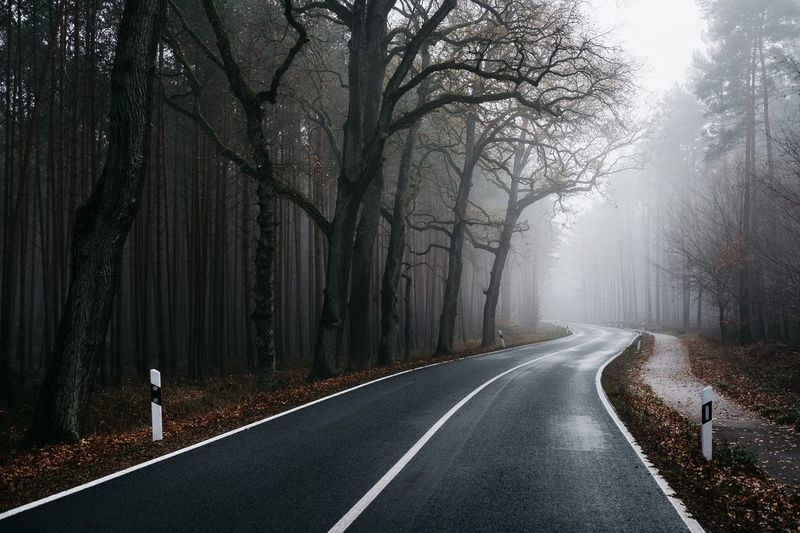 Diminishing perspective of empty road amidst trees in forest during foggy weather