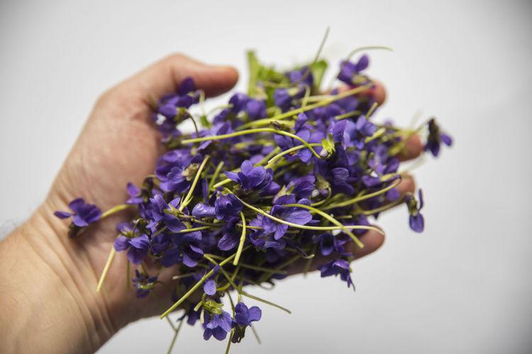 March violet -